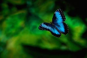 borboletas-raras