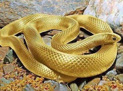 A Simbologia da Serpente