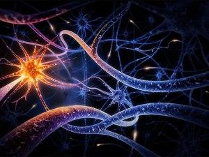 025_ Rossana - neuronios espelho